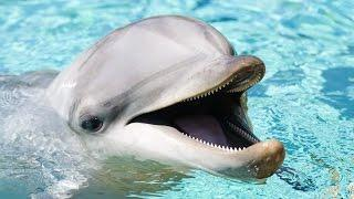 My Dolphin Show 4 - Kid games | Games funny for children