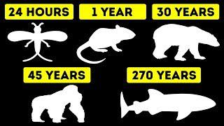 The Shortest and Longest Lifespans of Animals