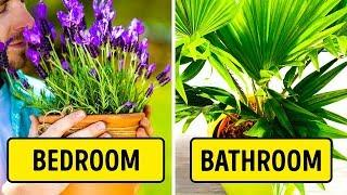 6 Plants for Your Bedroom to Help You Sleep Better
